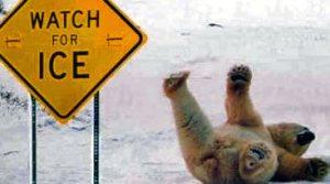 funny-polar-bear-pic-img121_edited2