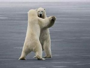 "Celebrating humans returning to normal. Polar Bears tell AP reporter... ""We are tired of being caught in the middle of a human made hoax""."