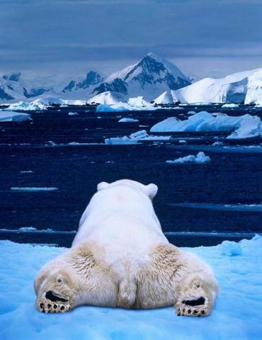 es lebih cepat mencair, cari makan makin sulit...