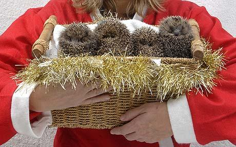 Because I know you'd rather see a pic of baby hedgehogs than of The Fraud