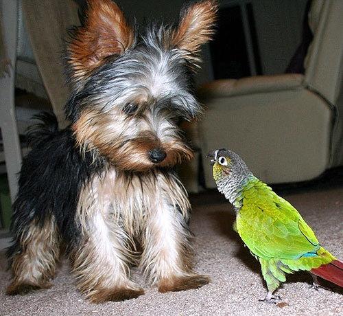 dog&parakeet