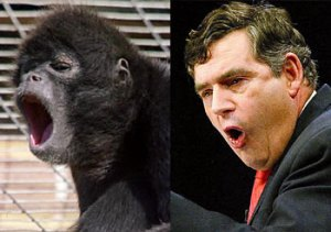 Trick Question: Which is the Howler Monkey?