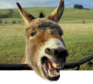 laughing donkey2