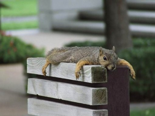 pooped squirrel